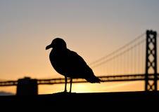 San Francisco Seagull & Bridge Stock Photography