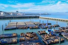 San Francisco Skyline van Pijler 39 met Zeeleeuwen, Liberty Ship van WO.II en Golden gate bridge in Mist stock foto's