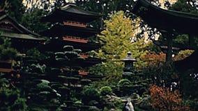 San Francisco Tea Garden stock video footage