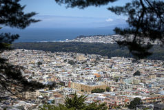 San Francisco - Through the Trees Stock Images