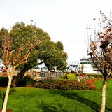 San Francisco. Trees pier 39 Royalty Free Stock Photo