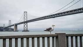SAN FRANSISCO CA, Wrzesień, - 02, 2014: Seagull podpalanym mostem w San Fransisco Fotografia Stock