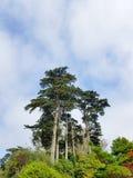 San Fransisco japończyka ogród Zdjęcie Stock