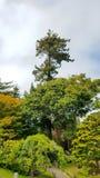 San Fransisco japończyka ogród Obraz Stock