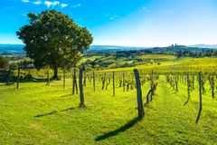 San Gimignano panoramic medieval town towers skyline and vineyar Stock Images