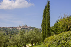 San Gimignano with vineyards Stock Image