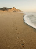San Gregorio Beach with Bird Tracks Royalty Free Stock Photography