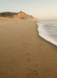 San Gregorio Beach met de Sporen van de Vogel Royalty-vrije Stock Fotografie