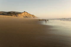 San Gregorio Beach at Sunset Royalty Free Stock Photo