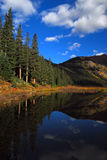 San Isabel National Forest. Big tall spruce and beaver pond and fall foliage stock images