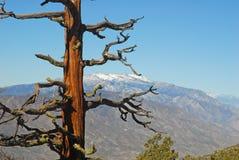 San Jacinto Mountains Stock Afbeeldingen