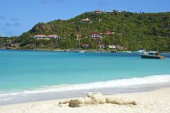 San Jean beach in St Barths, Caribbean Royalty Free Stock Image