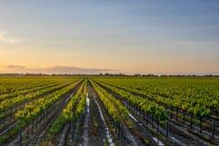 San Joaquin Stanislaus Winery da Tracy California Fotografia Stock Libera da Diritti