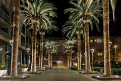 San Jose palmy obraz royalty free