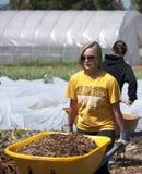 San Jose State student volunteer. San Jose students volunteer at Veggielution. Veggielution, a community farming non profit organization. Located in San Jose Stock Photo