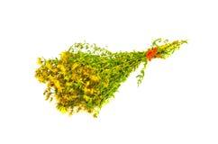 San Juan digno de manojo médico amarillo de las flores (perforatum del hypericum) fotos de archivo