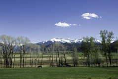 San Juan Mountains. Snowy San Juan Mountain range above a pasture near Ridgway, Colorado on a sunny day in early May Royalty Free Stock Images