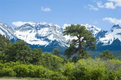 San Juan Mountains in June. Snowy San Juan Mountains off Ouray County Road 5 above Ridgway, Colorado in June Royalty Free Stock Photography