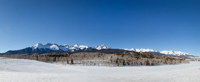 San Juan Mountains Winter Panorama. With a stand of Aspen and coniferous trees in the foreground Stock Photo