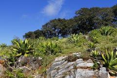 San-landschap III van luispotosi Stock Foto