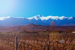 San Lorenzo peak snowy mountain. Winter vineyard grapevines. La Rioja stock photography