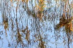 San Luis Rey River Abstract Stock Photos