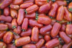 San Marzano tomatoes Stock Image