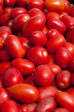 San Marzano tomatoes are ready to make sauce. From italy Royalty Free Stock Photo