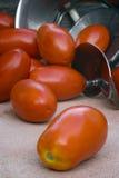 San Marzano tomatoes. For tomato puree (Pomarola), Italian cuisine Royalty Free Stock Photography