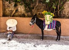Man with mexican revolutionary costume and donkey Royalty Free Stock Photos