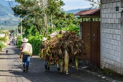 Farm workers with horse laden with maize, Guatemala. San Miguel Duenas, Guatemala - October 10, 2017: Farm workers walk with horse laden with maize in village in royalty free stock images