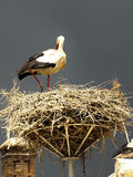San Miguel storks Royalty Free Stock Photo