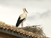 San Miguel storks Stock Image