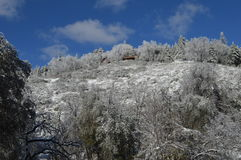 San nevado Bernardino Mountain Forest Lodge foto de archivo