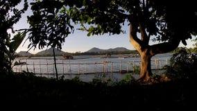 Tree grown at lake shore tracking shot. San Pablo City, Laguna, Philippines - June 5, 2015: Tree grown at lake shore. tracking shot stock video