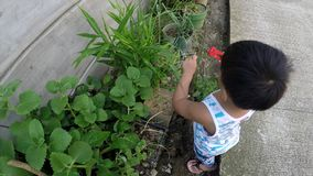 Baby boy learning gardening cutting plant with toy pliers. San Pablo City, Laguna, Philippines - October 24, 2017: baby boy learning gardening cutting plant with stock video footage