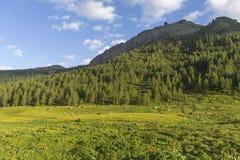 San Pellegrino Pass, Trentino Alto Adige, Alps, Dolomites, Italy: Landscape at the San Pellegrino Pass 1918 m. It`s a high moun. Tain pass in the Italian stock photos