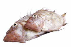 San Pierre Fish. Isolated on white background Royalty Free Stock Photos