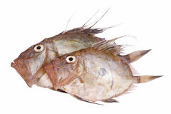 San Pierre Fish. Isolated on white Royalty Free Stock Images