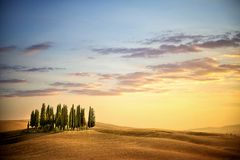 San Quirico d` Orcia, famous group of cypress trees in summer sunset light. Tuscany, Italy. SAN QUIRICO D`ORCIA, TUSCANY / ITALY – Beautiful tuscan landscape Royalty Free Stock Image