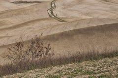 SAN QUIRICO D& x27; ORCIA, TOSCANA/ITALIA - 31 OTTOBRE 2016: Bello paesaggio toscano vicino a San Quirico D& x27; Orcia Fotografie Stock Libere da Diritti