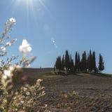 SAN QUIRICO D& x27; ORCIA, TOSCANA/ITALIA - 31 OTTOBRE 2016: Bello paesaggio toscano vicino a San Quirico D& x27; Orcia Fotografie Stock