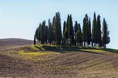 San QUIRICO D& x27 ; ORCIA, TOSCANE/ITALIE - 31 OCTOBRE 2016 : Beau paysage toscan près de San Quirico D& x27 ; Orcia Image stock