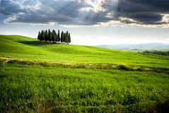 San Quirico d` Orcia, famous group of cypress trees. Tuscany landscape, Italy. SAN QUIRICO D`ORCIA, TUSCANY / ITALY – Beautiful tuscan landscape near San Stock Image