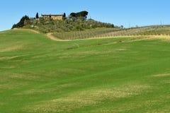 SAN QUIRICO d ` ORCIA TUSCANY, WŁOCHY, MAR,/- 31, 2017: Tuscany krajobraz w wiośnie, Uprawiający ziemię dom z tocznymi wzgórzami  Obrazy Royalty Free