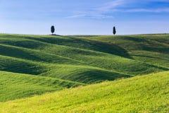 SAN QUIRICO d ` ORCIA, TUSCANY WŁOCHY z tocznymi wzgórzami i Tuscan cyprysowymi drzewami Lokalizować w Val d ` Orcia wsi obrazy stock
