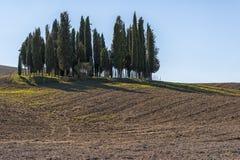 SAN QUIRICO D& x27; ORCIA,托斯卡纳/意大利- 2016年10月31日:在圣Quirico D& x27附近的美好的托斯坎风景; Orcia 免版税库存照片