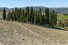 SAN QUIRICO D'ORCIA, TUSCANY / ITALY - OCTOBER 31, 2016: Beautiful tuscan landscape near San Quirico d'Orcia Stock Image