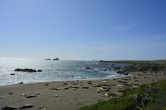 San Simeon Elephant Seals Images stock