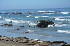San Simeon Elephant Seals - Juni Royalty-vrije Stock Fotografie